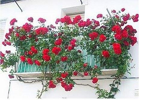 Decoración de balcones y terrazas pequeñas