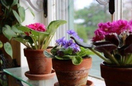 Plantas artificiales de ikea fotos y precios blogdecoraciones - Plantas artificiales ikea ...