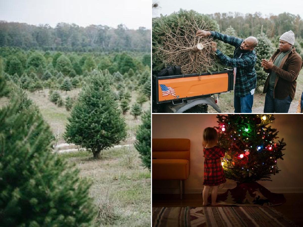 Árboles de Navidad naturales: Guía completa de cuidados y consejos