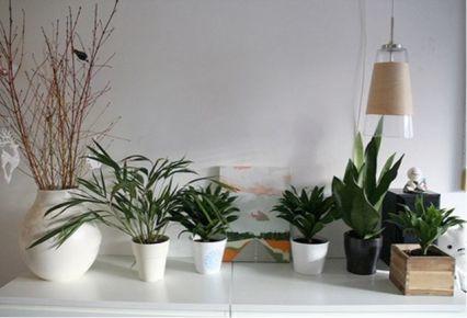 Decorar con elementos naturales blogdecoraciones for Plantas de interior para decorar