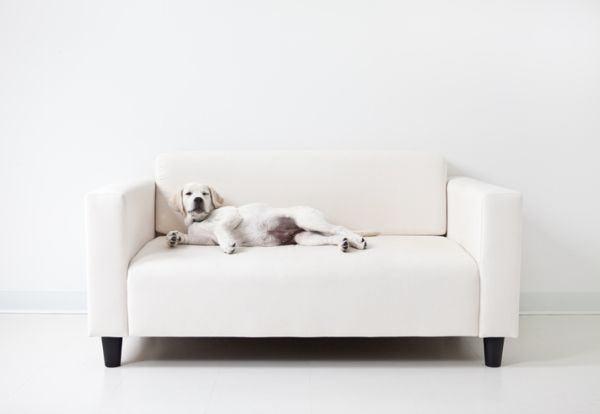 como-quitar-el-mal-olor-a-las-sofas-istock5