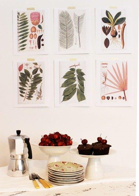 cuadros-botanica