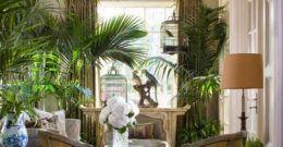 Cómo cuidar las palmeras dentro de casa