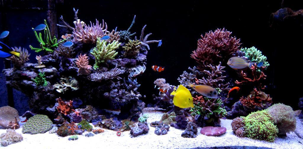 C mo decorar un acuario blogdecoraciones for Peces artificiales para acuarios