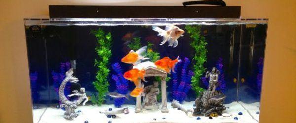 Cómo decorar un acuario