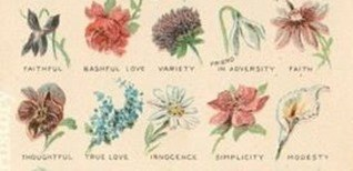 dibujos-flores