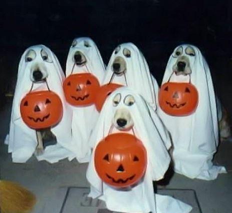 disfraces de halloween 5