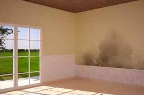 Quitar moho de las paredes | Femosa Blog