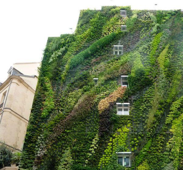 C mo hacer jardines verticales paso a paso materiales - Construir jardin vertical ...
